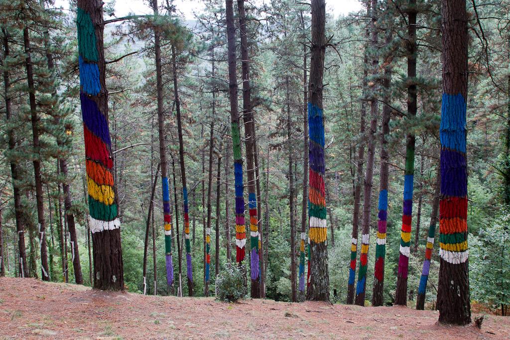 Bosque pintado de oma urdaibai vizcaya - Arboles pais vasco ...
