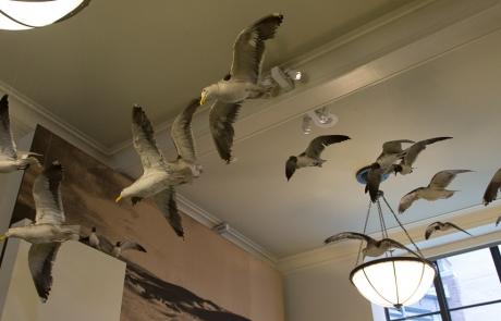 Museo Historia Natural – (Nueva York)